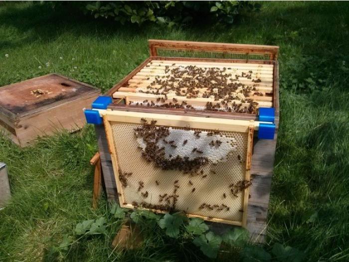 蜂巢框架钩