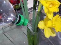 瓶植物浇水盖